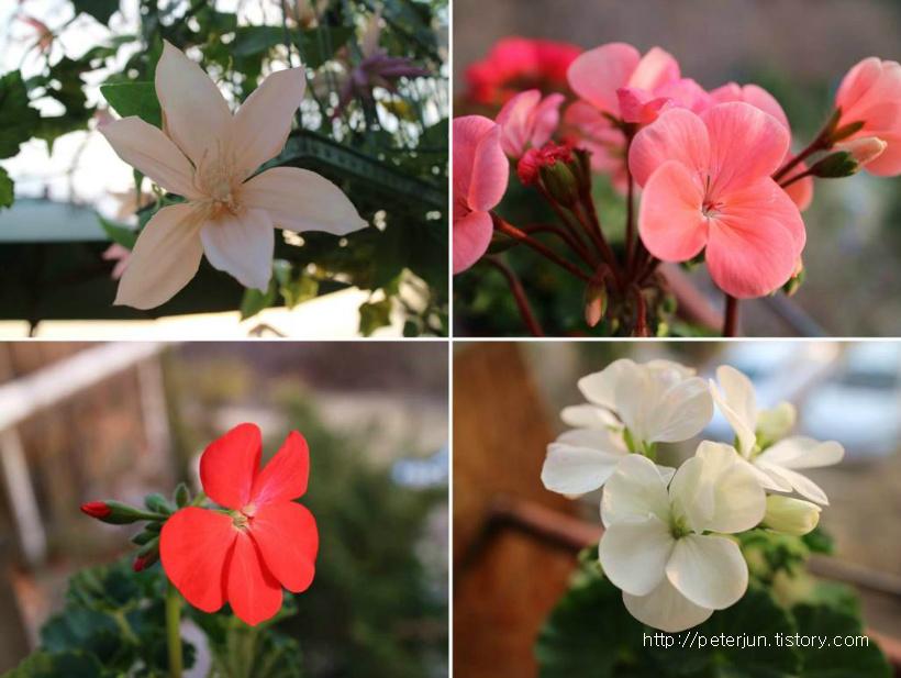 예쁜 꽃들