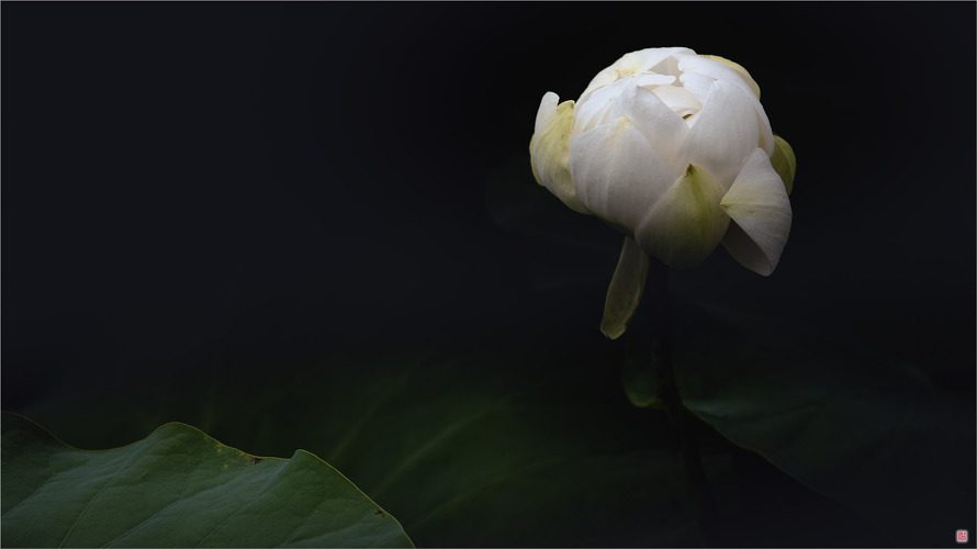 [삼성NX500] 蓮