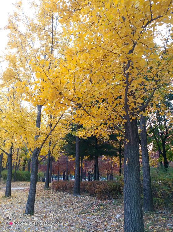 서울숲 은행나무 길