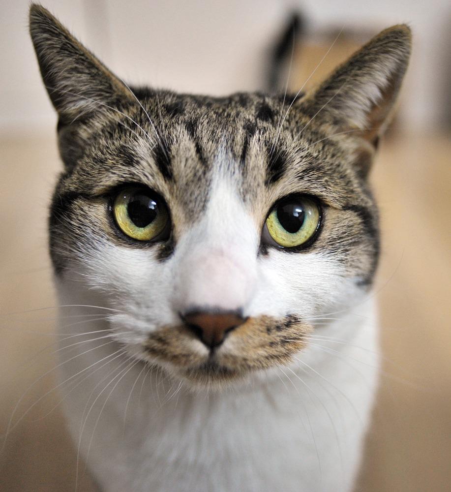 고양이 밀키와 보낸 하루~ Cat Milky