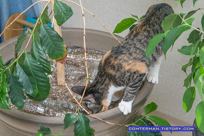 고양이 화분 흙파기 방지