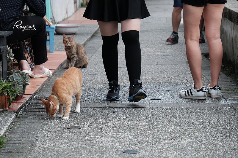 허우통 고양이 마을을 배회하는 고양이들