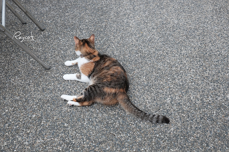허우통 고양이 마을 삼색이