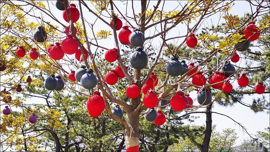 한겨울 나무에 주렁주렁 달린 열매 주머니.