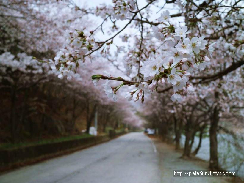 아름다운 벚꽃