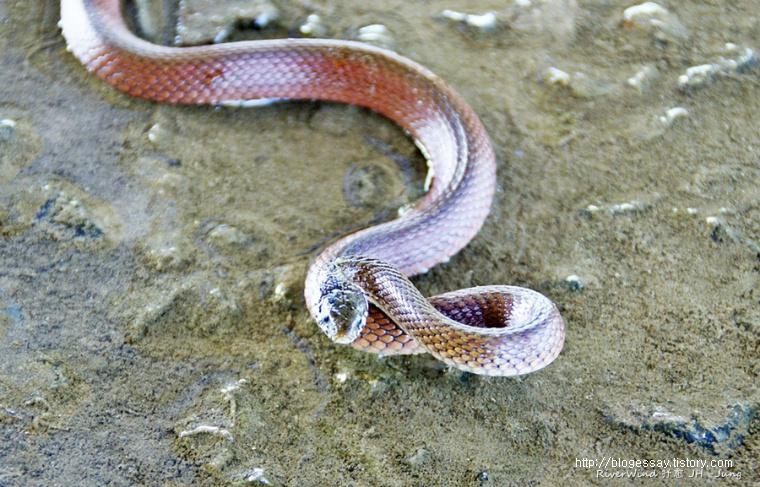 뱀 Snake 사진