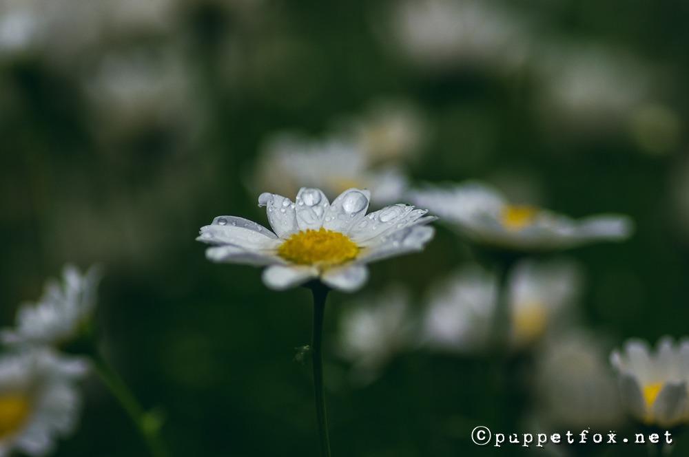 0516-빗방울-4